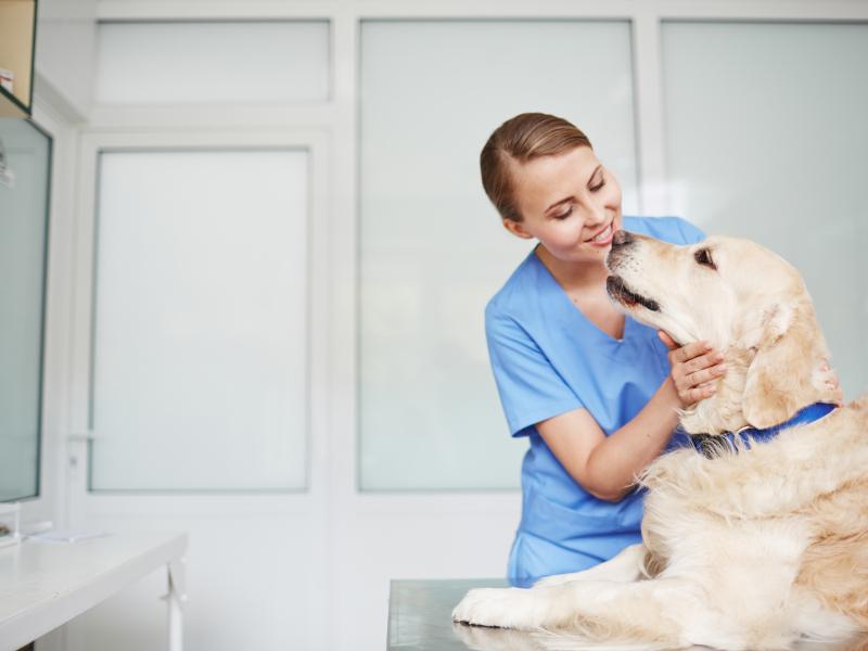 Ветеринарна медицина и хранително-вкусова промишленост